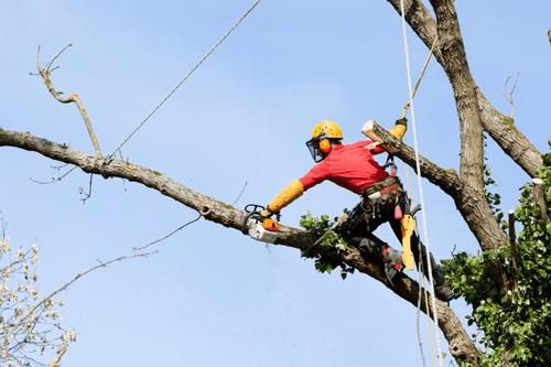 Demonteren van bomen