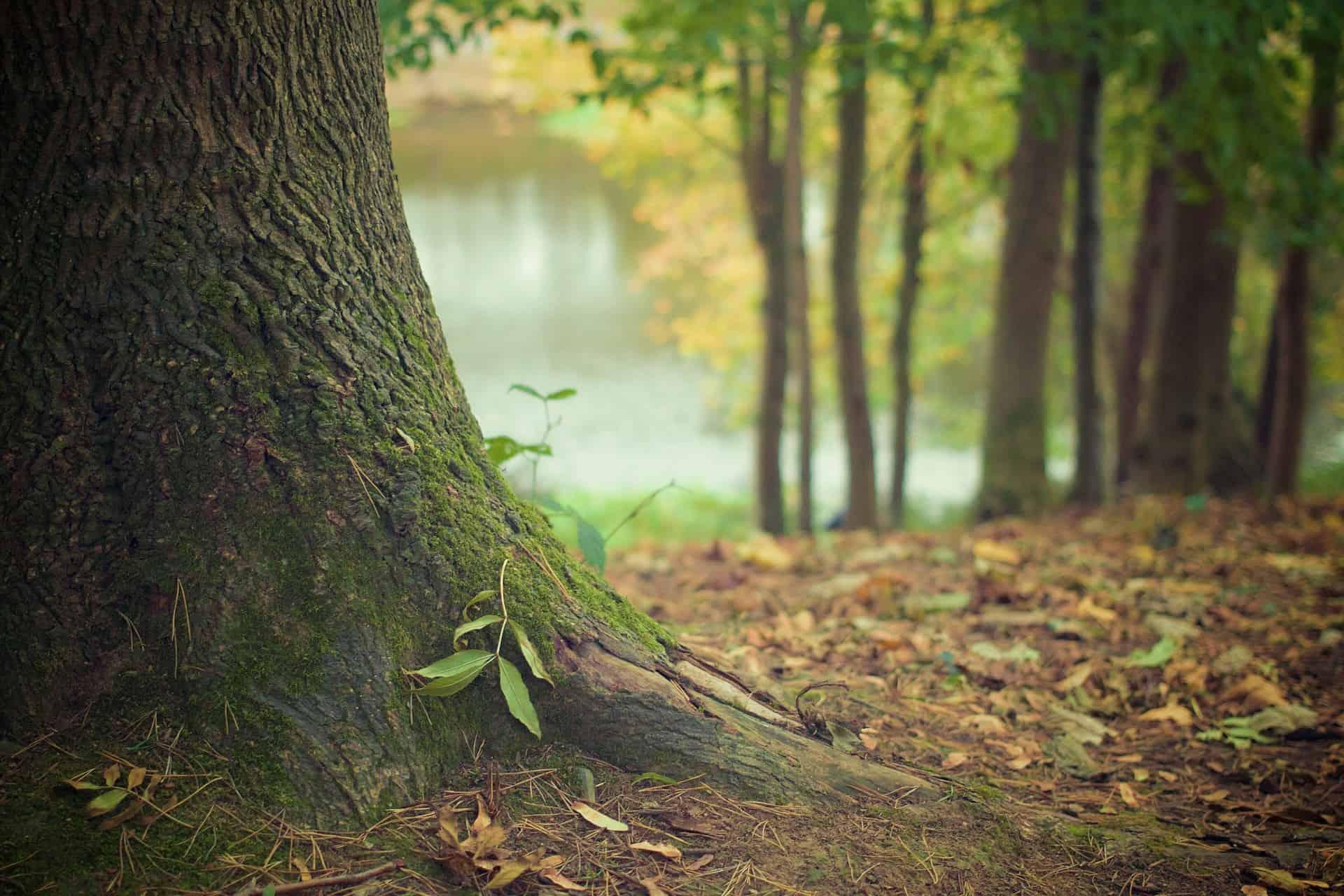 Plantdiepte van bomen