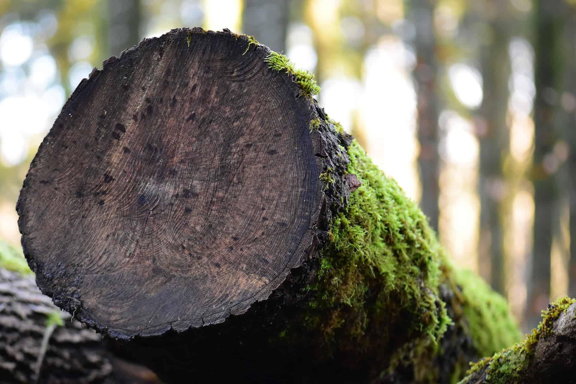 Hoe steekt de fysiologie van een boom in elkaar?
